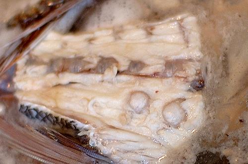 鯛の骨にあるイボ