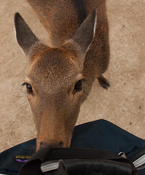 鹿ガムを探る