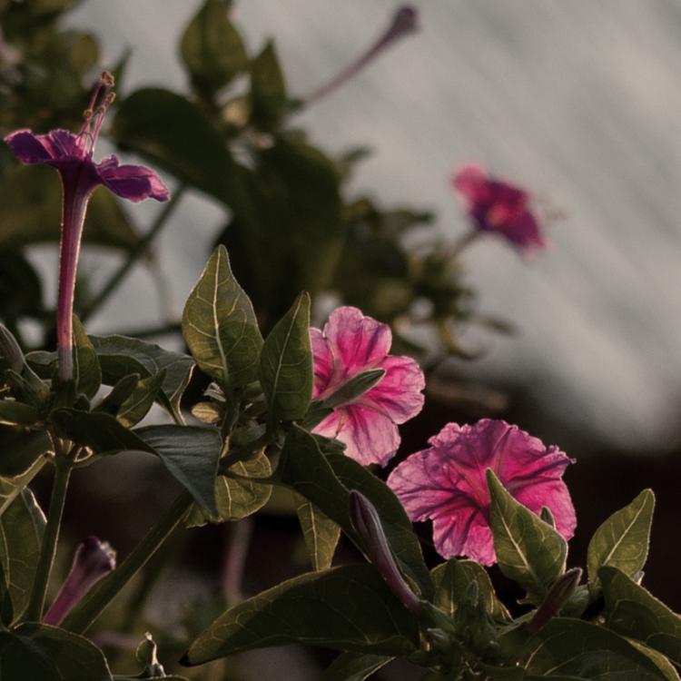 寄り添う花