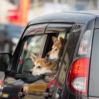 車窓からの犬