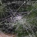 蜘蛛の巣の雫