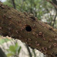カミキリムシの幼虫により開けられた木の穴